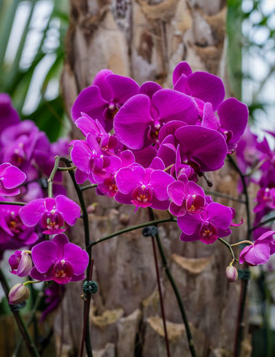 Purple Orchids Blossom Flowering Plant Focus On Foreground Nature No People Orchid Petal Pink Color Plant Purple