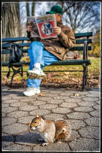 New York Squirrel Street Photography Capture The Moment