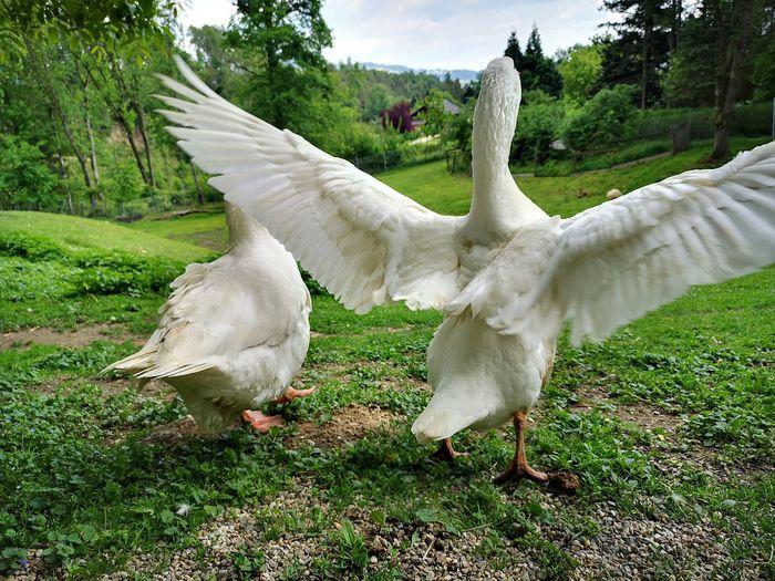 White birds on a field