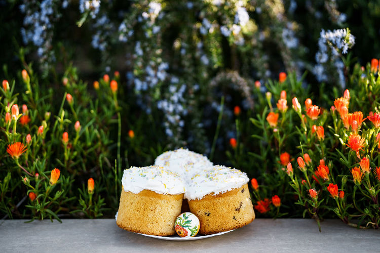 Close-up of cake against white flowering plants