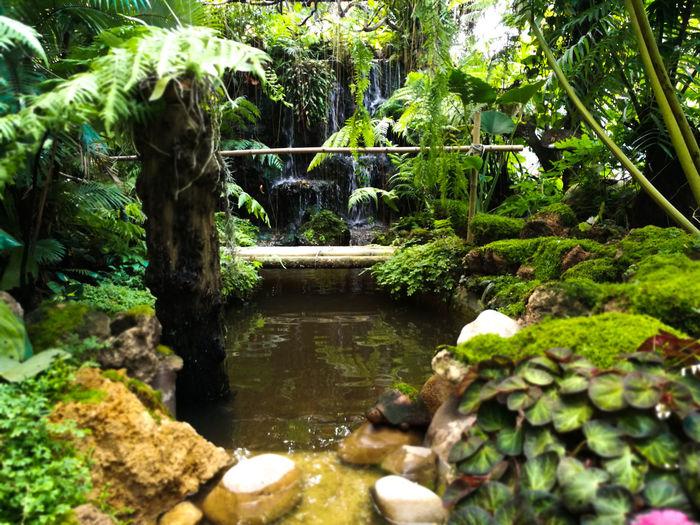 Beauty In Nature Day Flowing Flowing Water Forest Formal Garden Garden Green Color Growth Nature No People Outdoors Plant Rock Rock - Object Scenics - Nature Solid Tranquil Scene Tranquility Tree Water