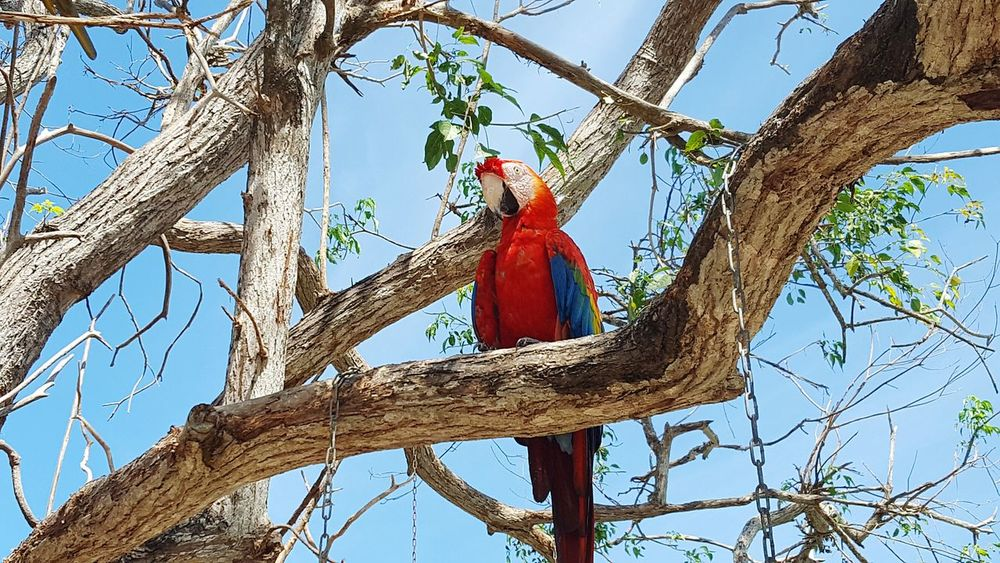 The beauty of the wild Parrot Beauty In Nature Outdoors Nature Animals In The Wild Beauty In Nature Aviario Nacional Colombia ♥  Cartagena/Colombia Nature Animal Wildlife