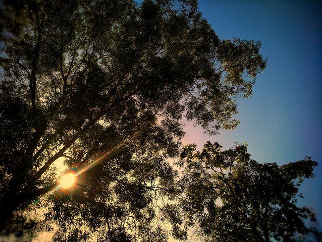 sunset Tree Area Landscape Scenery