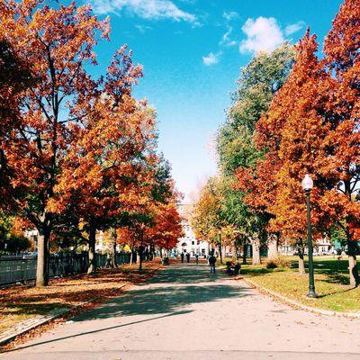 Boston Bostonpublicgarden Fall Autumn Outdoors