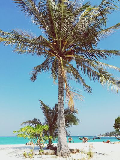 Thailand IPhoneography Palm Tree Palm Tree Sea Beach Tree Horizon Over Water Shore Scenics Clear Sky Blue Nature