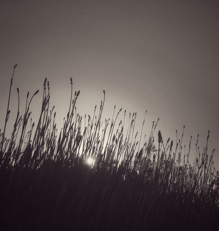 Meanderings under the early evening sun. Nature Plant Tranquility Outdoors Beauty In Nature Clear Sky Wanderer Wandering Blackandwhite Photography Black And White Collection  Black And White Blackandwhite Evening Sun Evening Sun_collection Calm Calmness