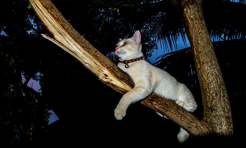High angle view of dog sitting on tree at night