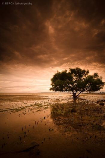 """""""LONELY TREE"""" taken in the city ruined by tsunami last 2004, Banda Aceh."""