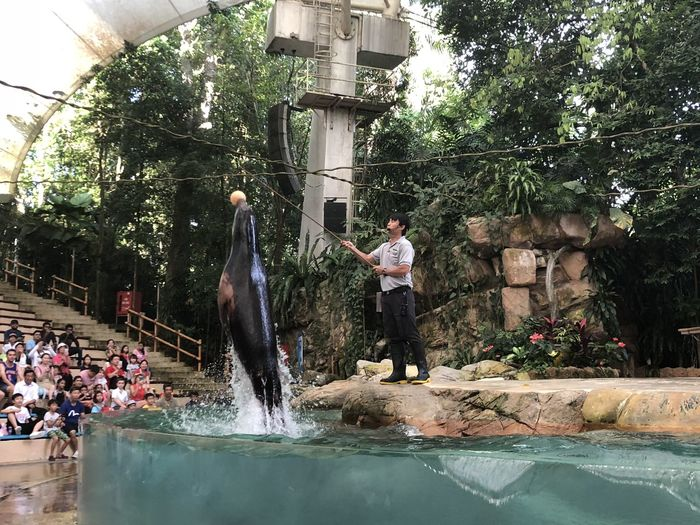 He can really jump! Animal Trainer Sea Lion Singapore Zoo Zoo Leap Motion Real People Splash Tricks Water