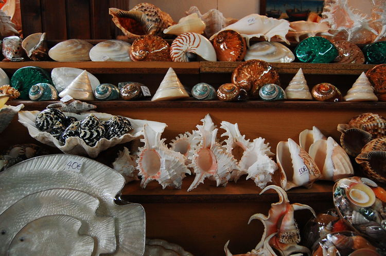 Sea shells Abundance Arrangement Art Choice Collection Display For Sale Group Of Objects In A Row Large Group Of Objects Market Market Stall Multi Colored No People Retail  Sale Sea Shells See Life Shelf Shop Still Life Store Variation