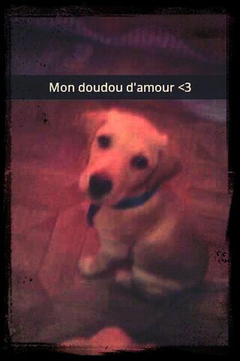 Mon bébé dog Love Babe ❤ Chien First Eyeem Photo