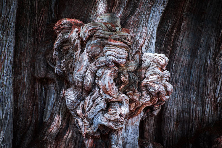 Low angle view of old sculpture on tree trunk
