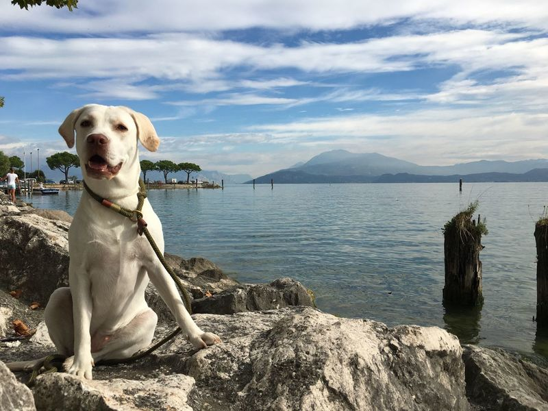 Sky Pets Nature Dog Water Outdoors Beauty In Nature Mountain Holiday
