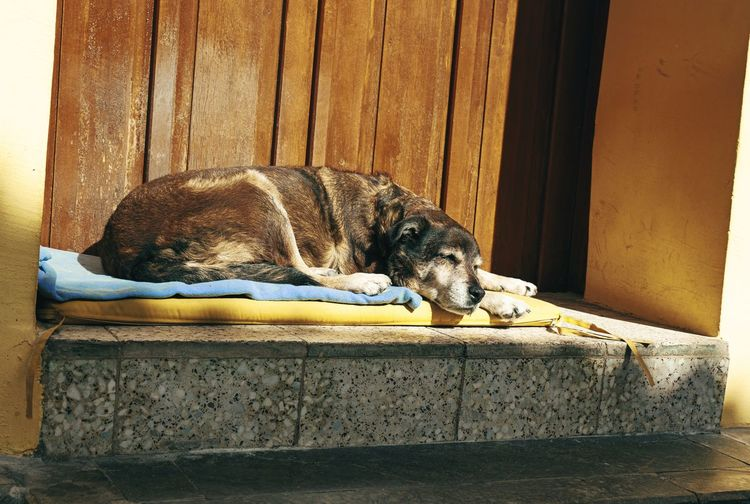 View of a dog sleeping on wood