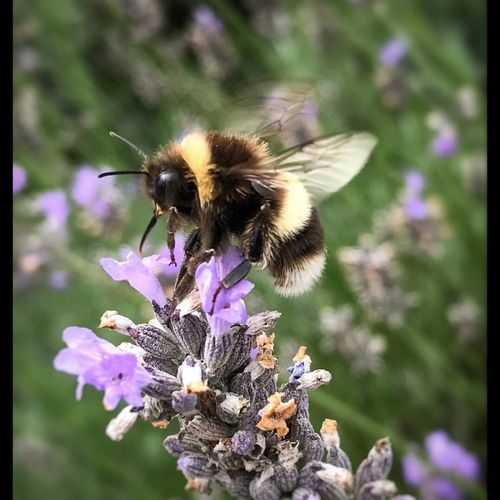 Today I saw a little bee, Flower Insect One Animal Animal Themes Nature Animals In The Wild Bee Honey Bee