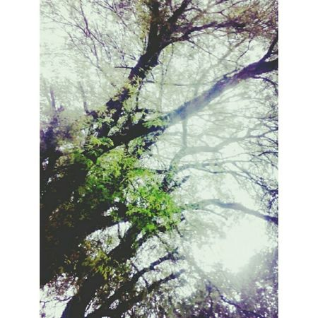 Naturelovers Nature_collection Nature_perfection Naturephotography Natureporn Cloudy Skies Tree Silhouette Tree_collection  Relaxing Peaceful