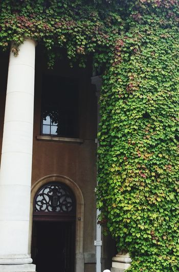 Ivy League Cape Town Southafrica University Of Cape Town Uct Minimalism Ivy Leaves Ivyleaves Ivywall Ivy