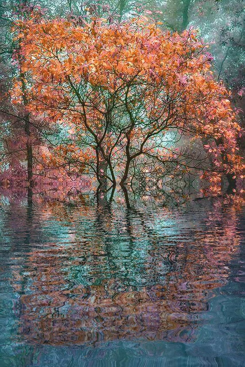 tree, autumn, beauty in nature, nature, branch, growth, tranquility, outdoors, scenics, no people, forest, water, day, sky