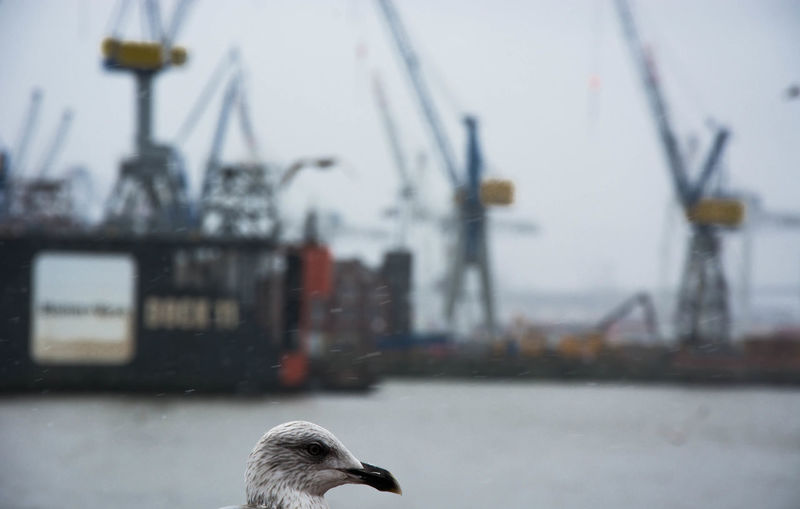 "say hello to the ""Focus"" ;) Bird Bird Photography Blurry Blurry Backround Detail Eye4photography  EyeEm Birds Focus On Foreground From My Point Of View Hamburg Hamburg Harbour Hamburger Hafen Harbour HEAD Industrial Industrial Landscapes Industriekultur Industry Maritime Nautical Open Edit River Riverside Seagull Selective Focus"