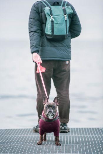 Full length of dog standing on sea shore