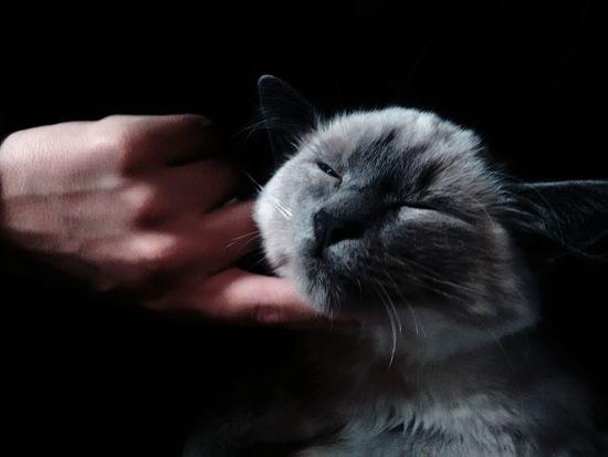 Pets Domestic Cat Feline Day Cat Cats 🐱 Cats Of EyeEm Cat Lovers Cat Photography Pet Pet Photography  Gato Gato😽 Photography Facatativa Gatito