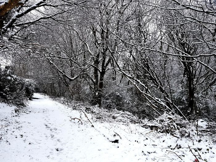 Woodland Walk It's Cold Outside Winter Is Here Snow Walks Backgrounds Abstract Full Frame Close-up