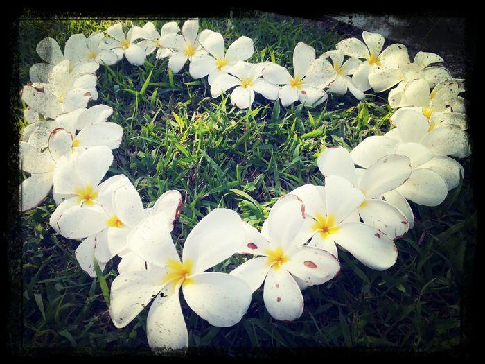 ความรักมันก่อเหมือนดอกไม้