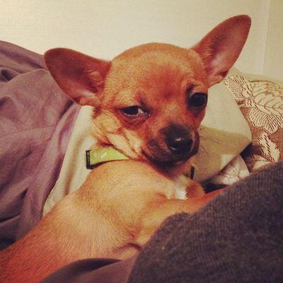 Happy 4 months pup! Dailyzigga Ricosuave Howyudoinnn