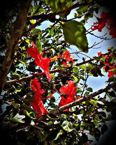 Flowers Jardins Gardens Floroj Flores Brazilo Brazil Brasil Leaf Tree Nature