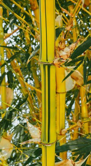 Close-up of yellow lizard on tree