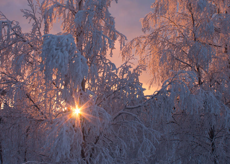 That's all you get of sun, if you climb to the roof. Beauty In Nature Cold Temperature Nature No People Outdoors Sky Snow Sun Sunlight Sunset Tree Winter