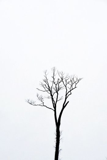 Bare trees against clear sky