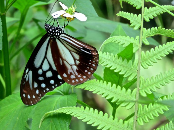 Beauty In Nature Butterfly Close-up Collecting Nectar Fern Flower Focus On Foreground Nature