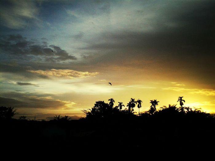 Good Morning Last Day Eye Em Nature Lover Hello World