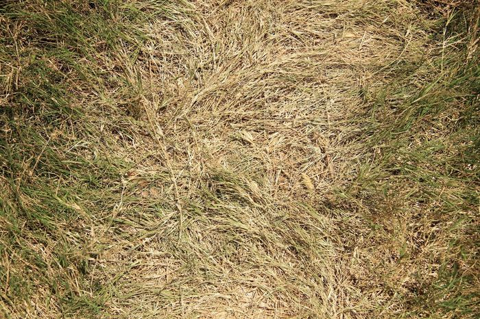 Full Frame Backgrounds Pattern Textured  Day Nature No People Outdoors Sunlight Close-up Wild Grass Dalat - Vietnam