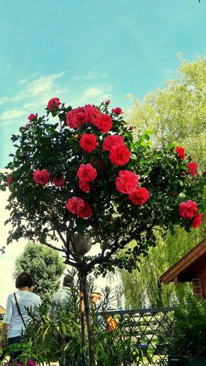 Red flowers blooming on tree against sky