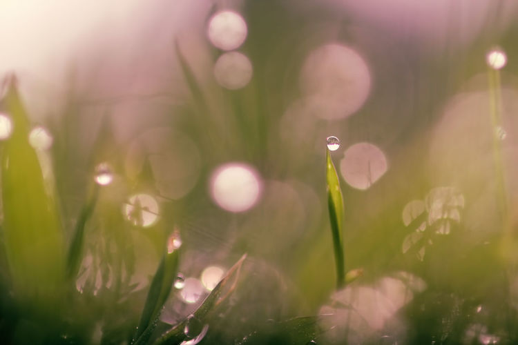 background of grass with bokeh Plant Lens Flare Growth Selective Focus Beauty In Nature Close-up Nature Sunlight Green Color No People Drop Wet Day Fragility Vulnerability  Water Tranquility Outdoors Freshness Dew Blade Of Grass Purity RainDrop Bright