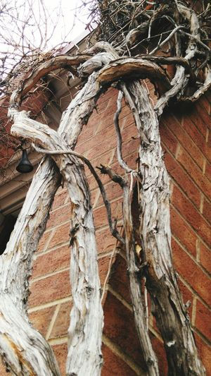Cloudy Afternoon Vines On Wall Vine Tree Tree Trunk Bark Texture Textured  Nature Textures Winter Trees Mixed Mix Tangle Tangled Tangles Vines Vines On Walls Winter Vines Wall Art EyeEm Nature Lover