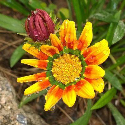 As belezas das flores do Agreste Pernambucano.