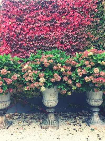 Fall colours Nature_perfection Flowerwall Pink Fall Fall Colors Growth No People Day Plant Nature Red Outdoors Flower First Eyeem Photo