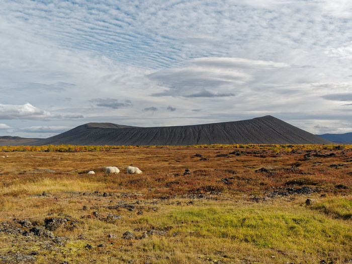 Volcano near Lake Myvatn, Iceland Iceland Myvatn Scoria Cone Beauty In Nature Cloud - Sky Day Environment Field Grass Idyllic Land Landscape Mountain Nature No People Non-urban Scene Outdoors Plant Remote Scenics - Nature Sky Tranquil Scene Tranquility Volcanic Crater Volcano Volcán