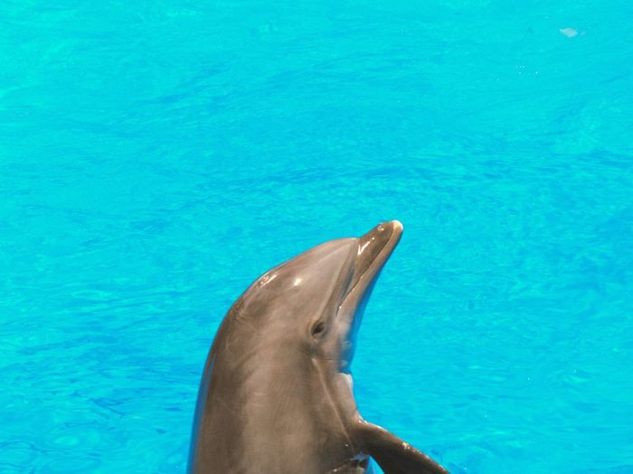 Water Blue Waves Dolphin Dolphinlover Havin Fun Having Fun With Photography Water Lover Animals Lover Portugal Algarve Zoomarine