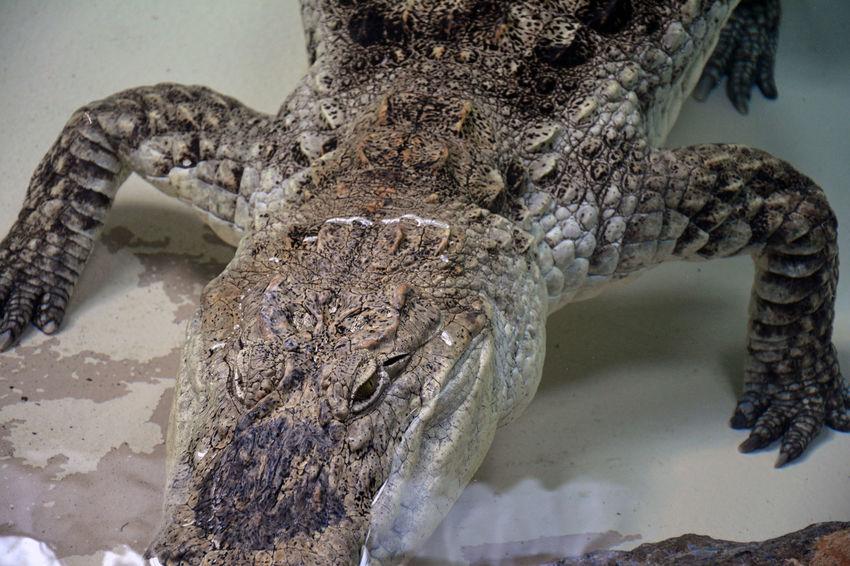 34th & Girard Captured Nature Near Phi-Love-delphia Taking Photos The Wild Zoology