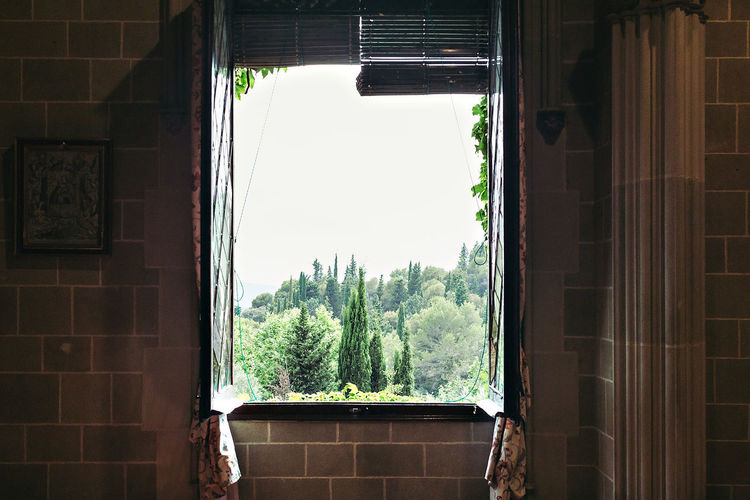 Architecture Building Exterior Built Structure Close-up Curtain Day Growth Home Interior House Indoors  Nature No People Plant Tree Window