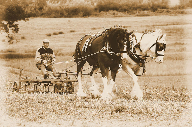 Horse ploughing Horse Ploughing Adult Day Domestic Animals Field Full Length Grass Horse Horse Cart Horseback Riding Horsedrawn Mammal Men Nature One Person Outdoors People Real People Riding Transportation Working