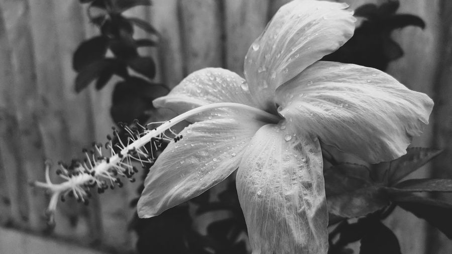 monochrome flower Close Up Close-up Flower Shot Flower Macro Photography monochrome photography Monochrome Black And White Plant Flower Head Flower Petal Plant Pollen Hibiscus Blooming Plant Life In Bloom Summer Exploratorium Visual Creativity EyeEmNewHere
