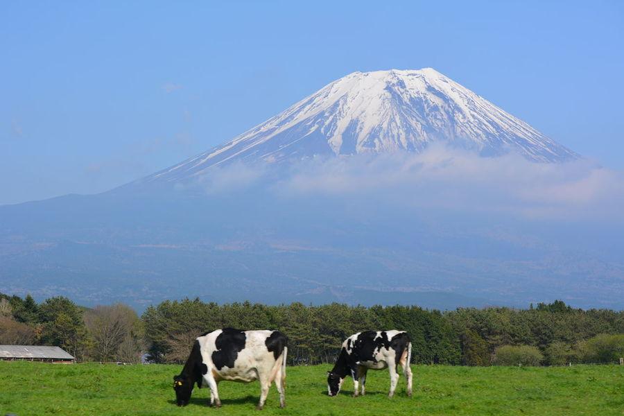 富士山 EyeEm Best Shots EyeEm Nature Lover EyeEm Gallery Blusky Mountain  Mt Fuji Japan Japan Photography World Heritage Grass Sky Nature Landscape Mtfuji 富士山 世界遺産 風景 山