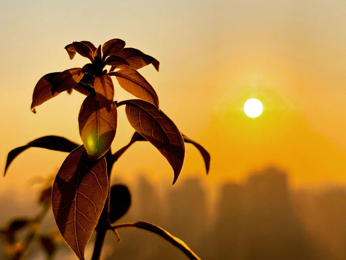 Close-up of orange plant against sky during sunset