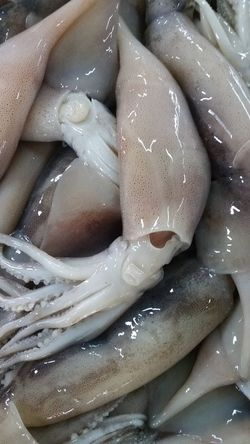 Seafoods Seafood Market Market Raw Materials Squid Squids Full Frame No People Food Close-up