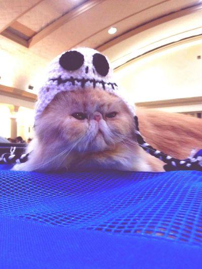 Monday mood Cat Cute Grumpy Grumpycat Fluffy Hug Blue Cat Lovers Cat♡ Catsofinstagram Cats 🐱